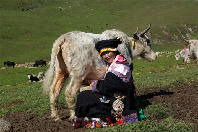 Social Entrepreneur in China Yak and Farmer